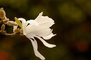 Oleander Im Winter : oleander gie en wie viel wasser braucht der strauch ~ Orissabook.com Haus und Dekorationen