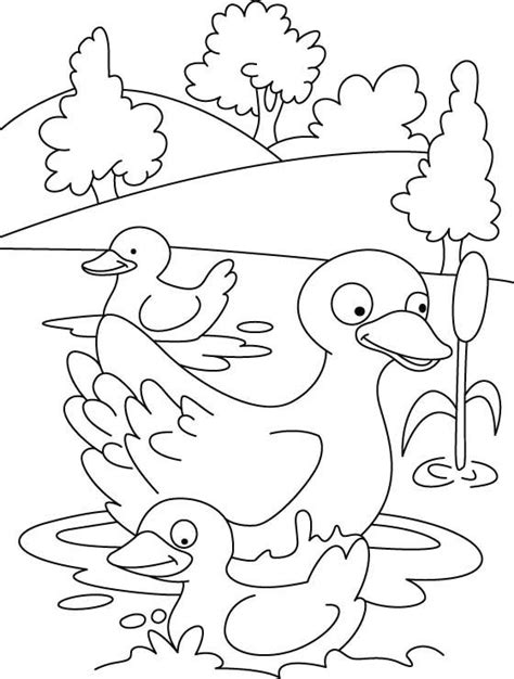 duck  duckling coloring page   duck  duckling coloring page  kids