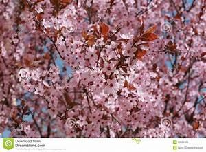 Árbol De La Primavera Imágenes de archivo libres de regalías Imagen: 30500409