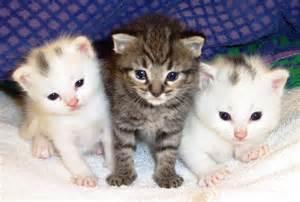 pet cats 的圖片結果