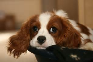 Dog Seizures Treatment