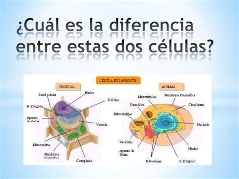 que es la celula animal imagenes celula animal 1