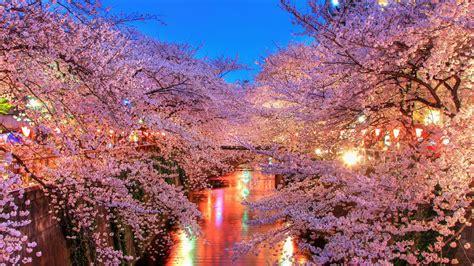 full hd wallpaper hanami river sakura japan desktop