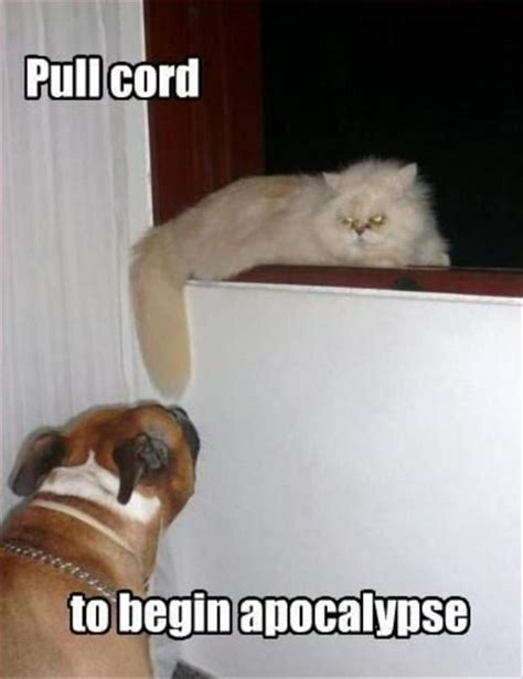 Dog And Cat Memes - funny cats and dogs dump a day