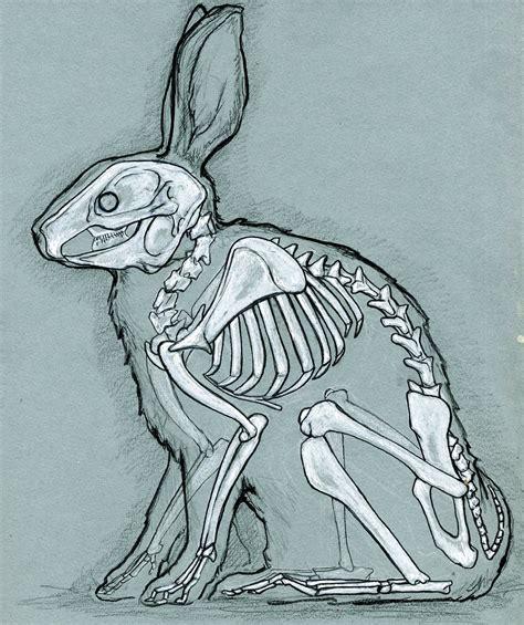 skeleton   bunny life  death   rabbit