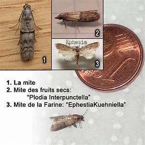 Mites Alimentaires Cycle De Reproduction : mites alimentaires le journal de magel ~ Dailycaller-alerts.com Idées de Décoration