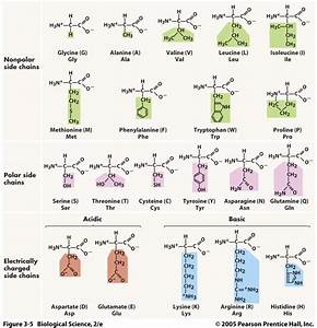 Amino Acids And Functional Groups
