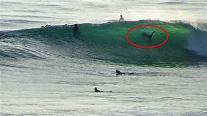 Shark Spotting San Diego Photograph Great White Shark