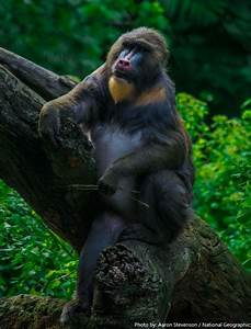 Interesting Facts About Monkeys Just Fun Facts