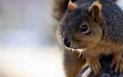 Squirrel Cute Wallpapers Buddies Travel Woman Desktop