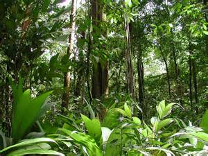 by the amazon rainforest today more than 20 % of the amazon rainforest ...