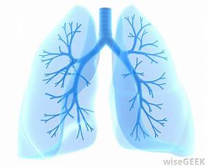 What Is A Lung Donor   With Pictures