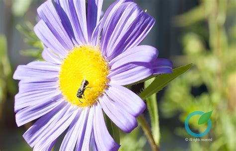 fiori per il giardino coltivare fiori per il giardino la casa e l orto