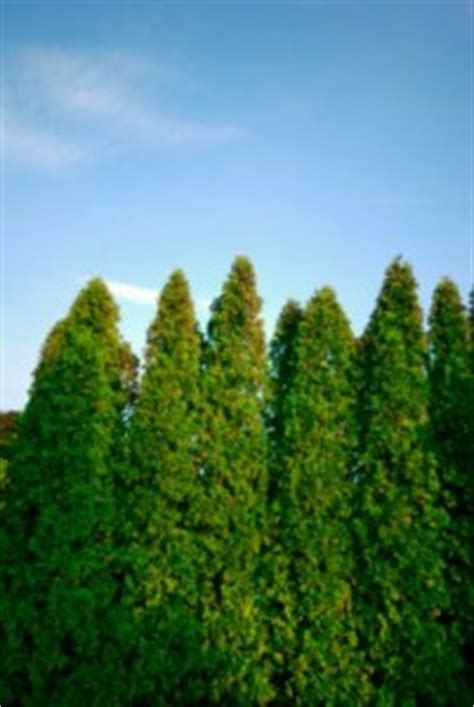 sound barrier shrubs reducing traffic noise with plants