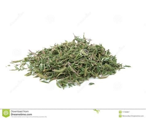 dried thyme dried thyme stock image image of appetizing aroma fragrant 17760867
