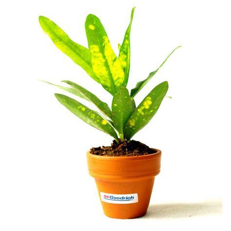 plantes de bureau plante dépolluante de bureau en pot terre cuite objet