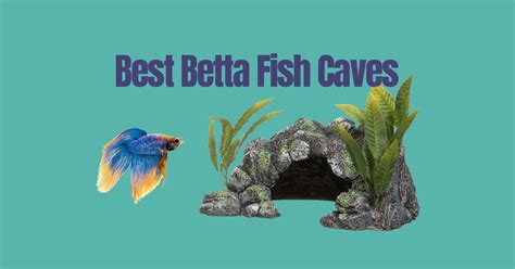 betta fish caves japanesefightingfishorg