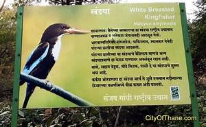 Sanjay Gandhi National Park Forest Entry   THANE.city