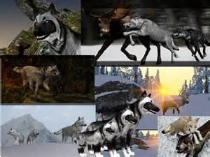 <b>Animal Games</b> Related Keywords & Suggestions - Realistic <b>Animal Games</b> ...