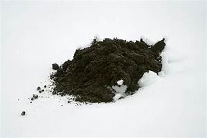 Was Tun Bei Nassen Wänden : was machen maulw rfe im winter pflanzen f r nassen boden ~ Markanthonyermac.com Haus und Dekorationen