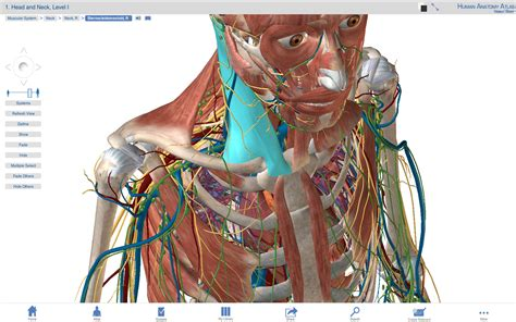 Anatomy Software Visible Body Pc Or Mac