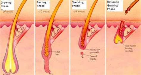 Difference Between Hair Loss And Hair Shedding by Shedding Breakage Part 1 The Difference Between