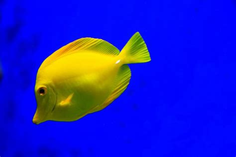 Nanomedicinas para animales marinos