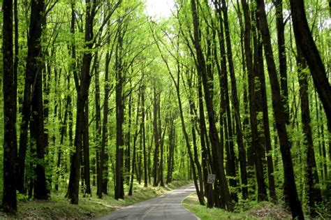 west virginia forest road pisgah usa travellerspoint