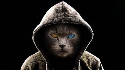 Cool Cat Hood Wearing Wallpapers Baltana Animals