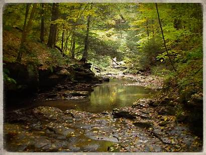Stream Fishing Streams Autumn Fly Rivers Wallpapers