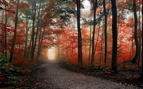 Autumn Wallpapers For Mac by Autumn Forest Wallpapers Top Free Autumn Forest