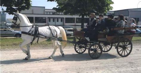 carrozze con cavalli cavalli e carrozze matrimonio con carrozza