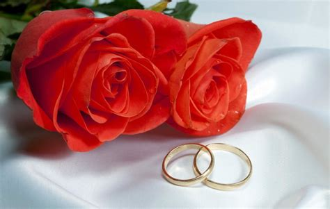rose day pics hd images status funny roses  red