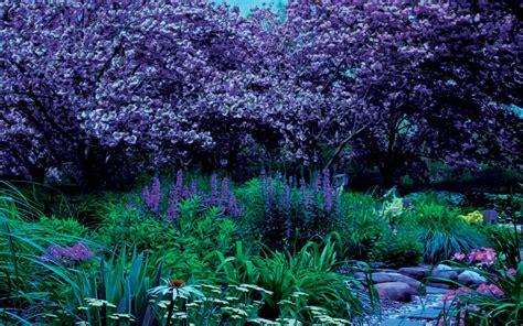hd garden plants rocks landscape high resolution images