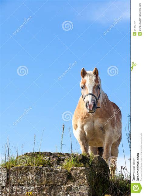 horse equidae ungulate domesticated ungulates current species ten order animals