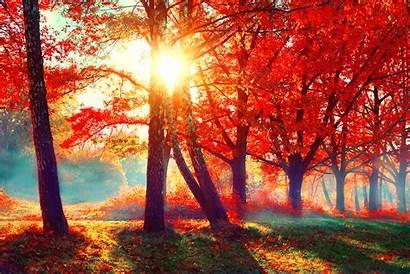 Fall Autumn Scene Nature Beauty Autumnal Park