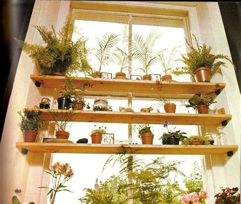 House Plants For Kitchen Window by House Plant Logan