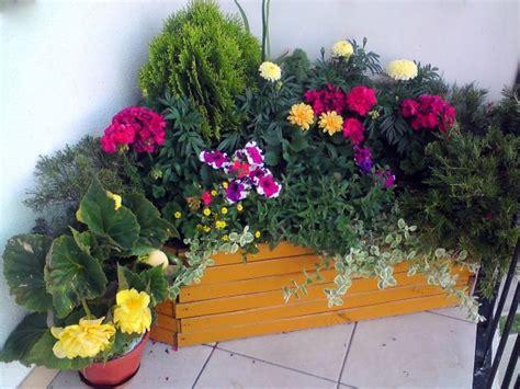 Blumen Für Sonnenbalkon blumen f 252 r sonnige balkone