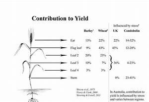 Crop Phenology