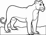 Lion Coloring Pages Female Lioness Drawing Children Mountain Printable Male Animal Sheets Getdrawings Bodybuilder Silhouette Colorings Supplyme Letscolorit 28kb 545px sketch template