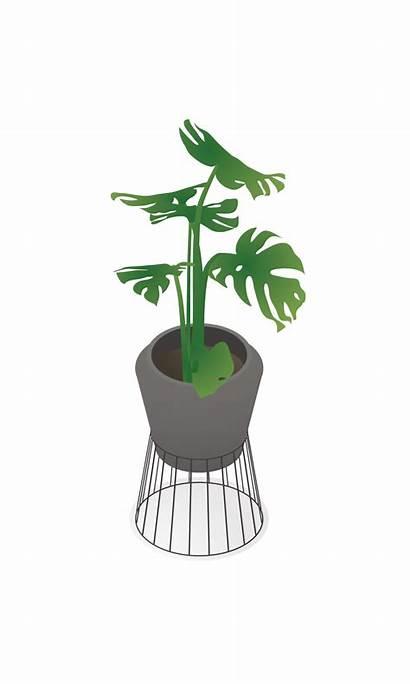 Isometric Plants Indoor Toffu Plant Interior Fake