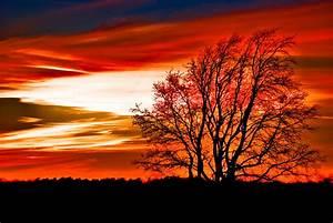 Texas Sunset Pyrography by Darryl Dalton