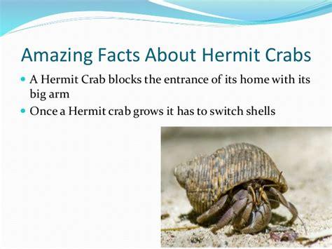 hermit crab programme 594 | hermit crab programme 4 638