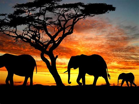 high resolution elephant pictures