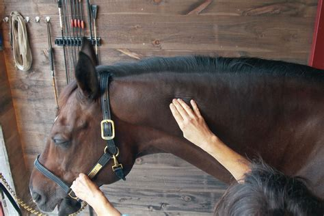 preventing  relieving tightness   horses poll