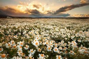 """What are """"works"""" in the Bible – """"works"""" are like daisies…"""
