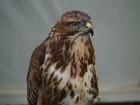 birds  prey   spot   lake district  pets