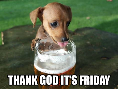 tgif friday dog beer funny tgif funny tgif pinterest