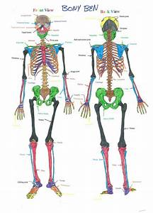 Diagrams Archives - Page 3 of 55 - Human Anatomy Charts