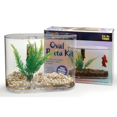 fish tanks aquariums  sale  youll love